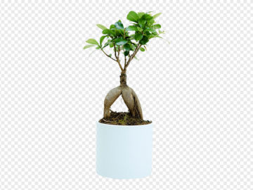 Bonsai PNG