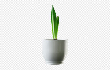 Plant In A Pot PNG