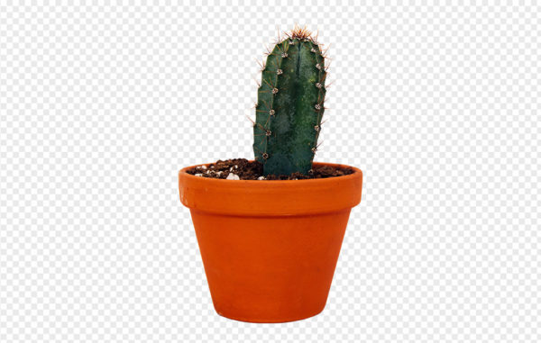 Potted Cactus PNG